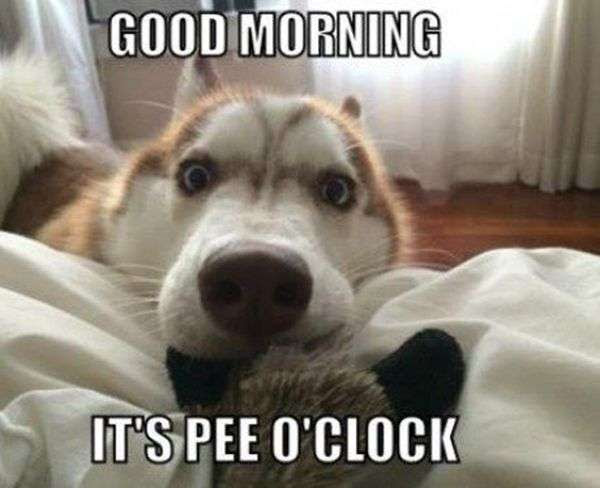 Funny Dog For A Good Morning Goodmorningpicscom