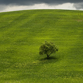 Lonely tree II. by Jure Kravanja on 500px.com