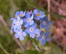 Encara  hi han flors a la tardo