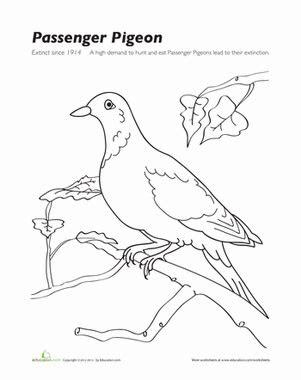 passenger pigeon worksheet educationcom