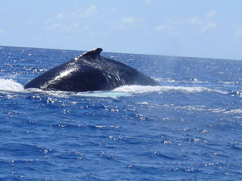 whalepic-061