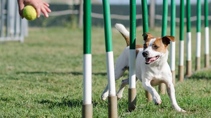 Consejos para practicar agility con el perro