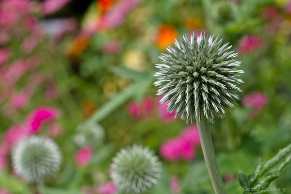 spiky, flower