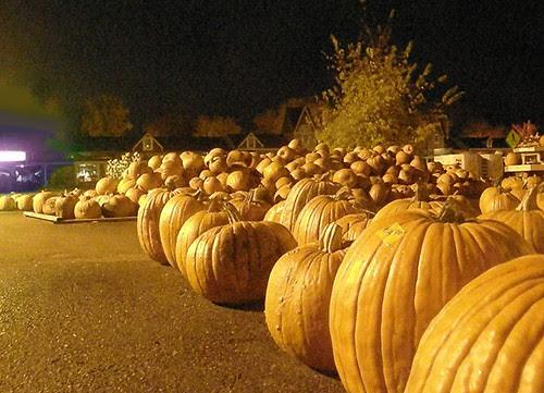 Wayzata pumpkins seek purple