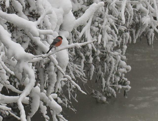snow in rye DSC_3260_1