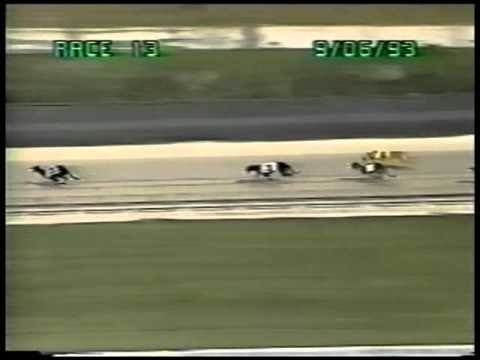 Palm Beach Greyhound Free Picks