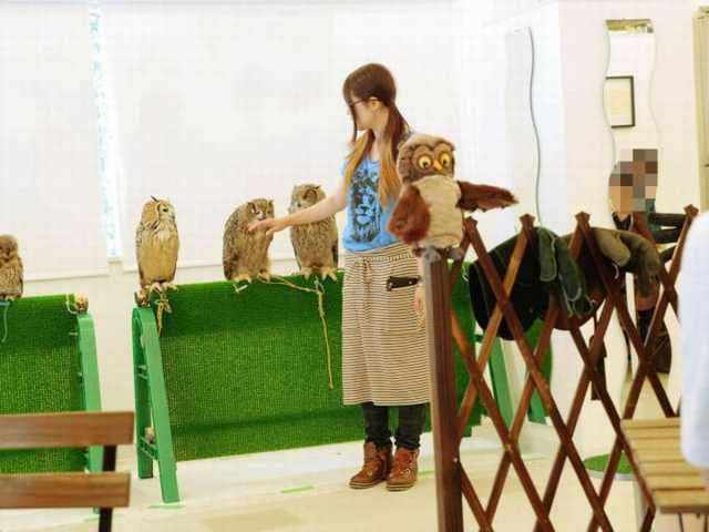 Influenza A virus subtype H5N1 New Type of Coffee Shop: The Owl Cafes!