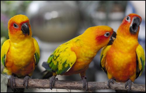 Birds at Phuket Botanic Garden