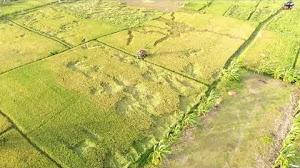 Jual Footage Aerial Drone Persawahan di Junok Bangkalan Madura Drone Tahun 2017