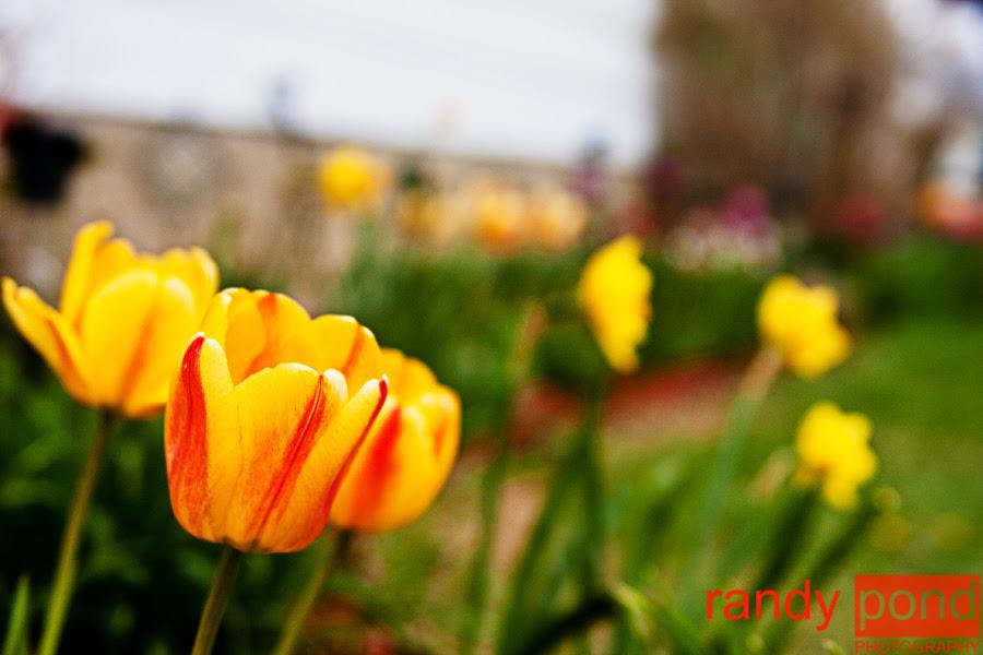 ~ Flower ~