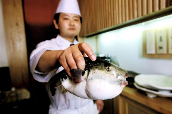 "Slide 6 de 18: Pufferfish, or ""fugu"", is the world's most dangerous delicacy. Chefs in Japan go through several years of training to learn how to remove the toxic parts of the fish, which are 1,200 times more poisonous than cyanide. Eating just a tiny amount (a pin head) of the wrong bit can be lethal."