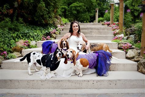 Best Dogs: Basset Hound Wedding Party   Daily Dog Tag