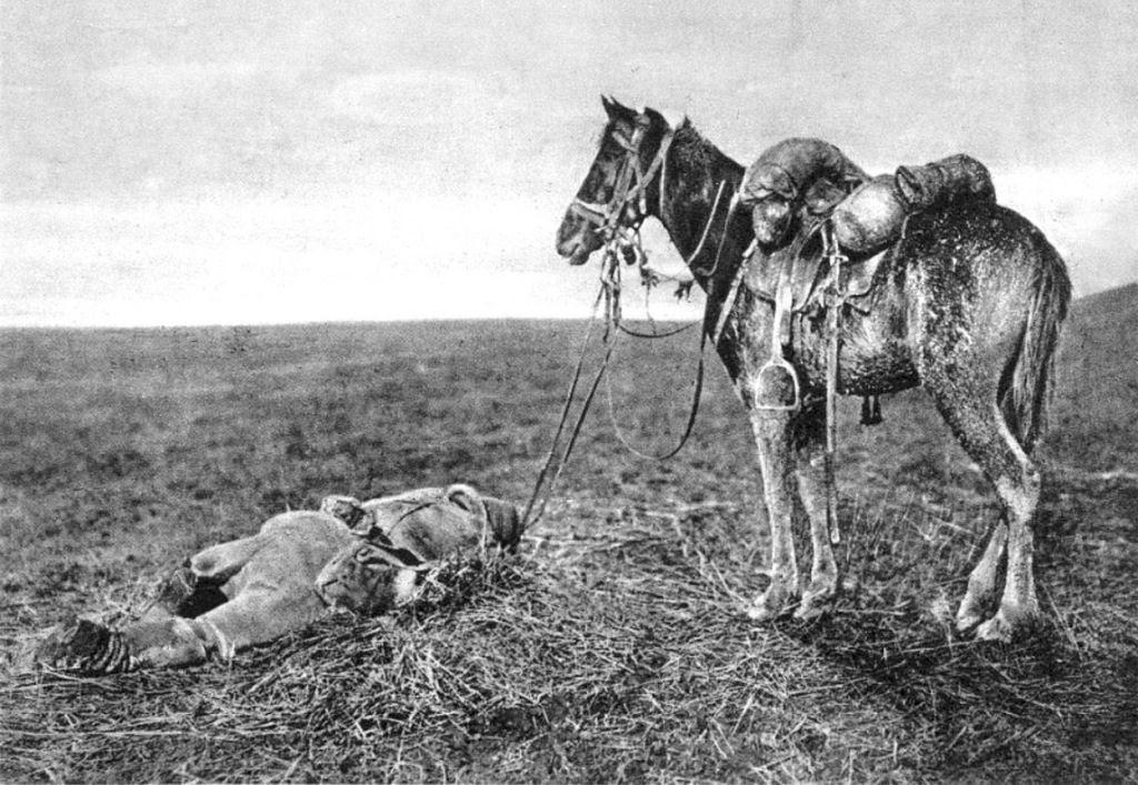 Os animais também lutaram na Primeira Guerra Mundial 27