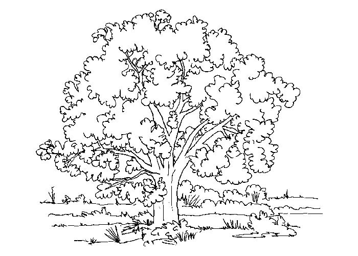 500 Top Cartoon Tree Coloring Pages Images & Pictures In HD