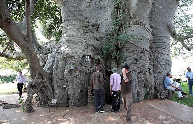 É possível entrar no tronco oco da árvore (Foto: Reprodução/South African Tourism)