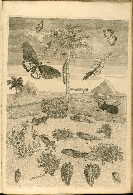 18th century insect engravings