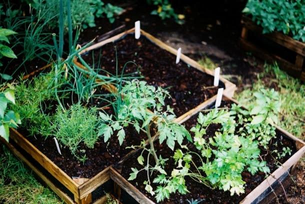 pomidorki i inne warzywa