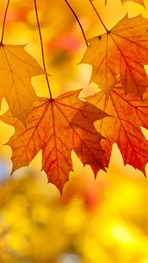 fall leaves iphone background wallpapers gallery