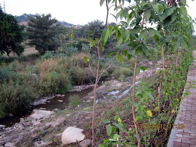 Clean River RamNadi - Visit SKYi Songbirds at Bhugaon, on Paud Road, Pune 411042