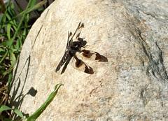 Dragonfly_63011c