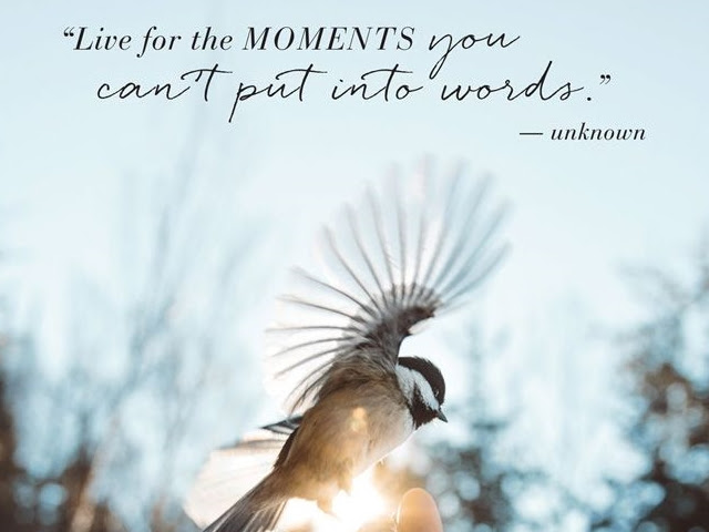 40 Living In The Moment Quotes Photography Ideas Buzz 2018