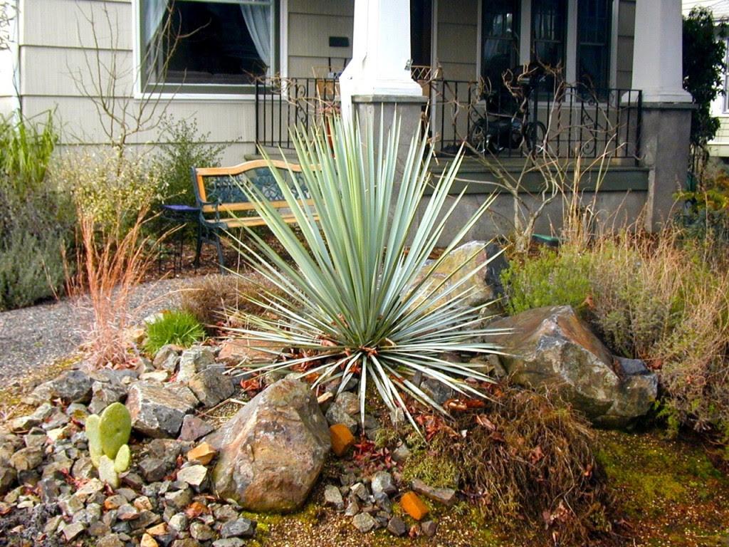 Yucca Garden Design Dunia Belajar
