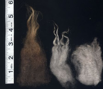 The 3 types of Shetland fleece.
