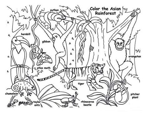 rainforest animals coloring page  print