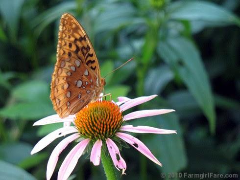 Attracting Pollinators 8