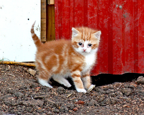 Oldest kitten