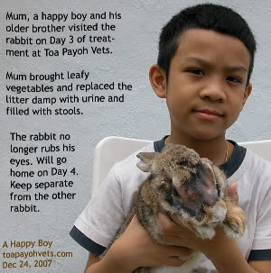 Conjunctivitis. Singapore Rabbit. Toa Payoh Vets
