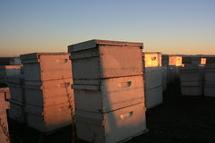 Bee Hives by mhall209, on Flickr