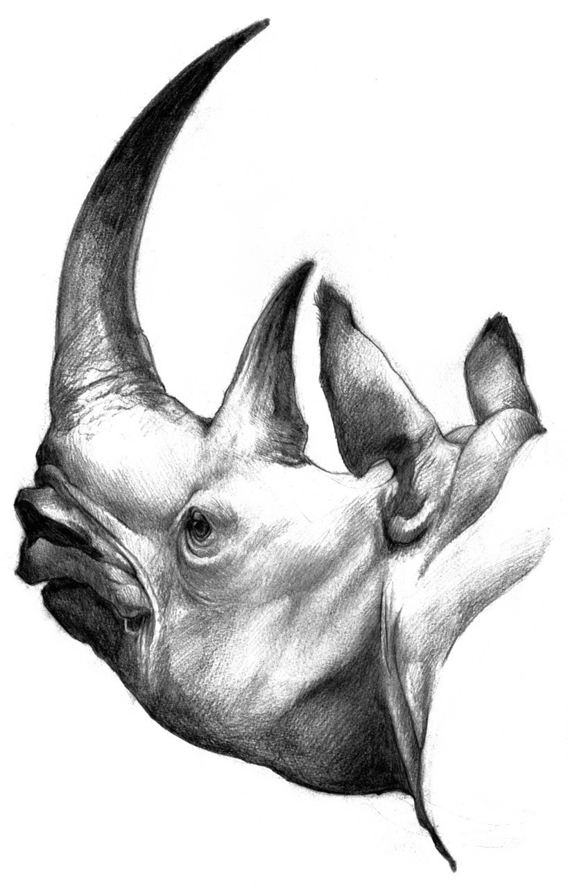 White Rhino, graphite 2010 Buy a print