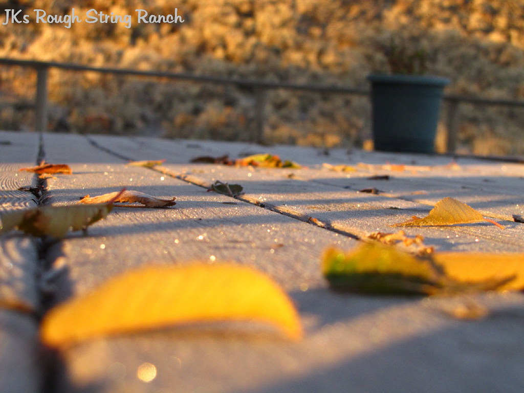 Frost on the Deck