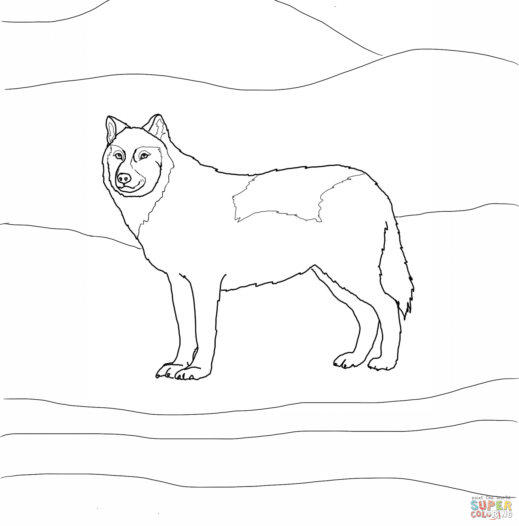 Arctic White Wolf coloring page   Free Printable Coloring ...