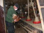 Hühnerbefreiung aus Volierenhaltung 29.11.2009