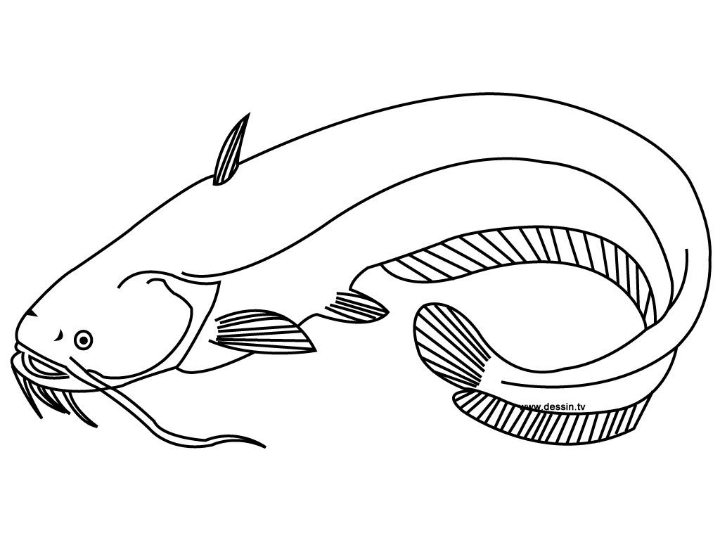Coloring Catfish