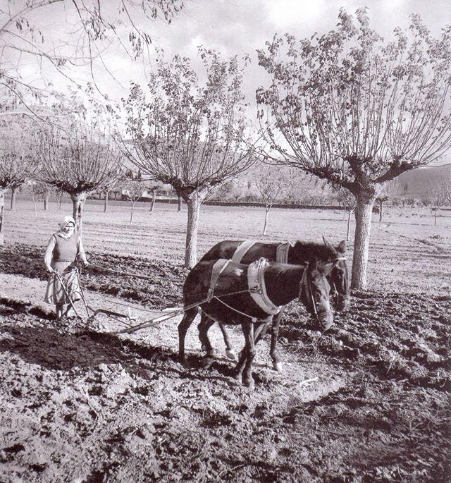 Γυναίκα που οργώνει. 1950-1960