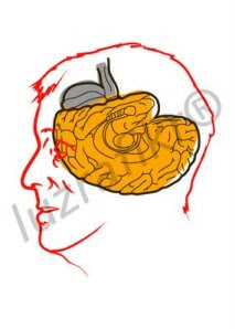 otak terbalik