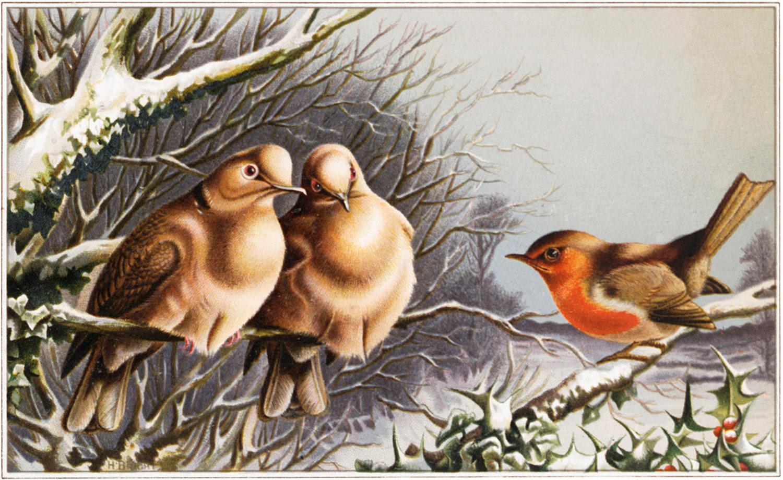 Winter Birds Image