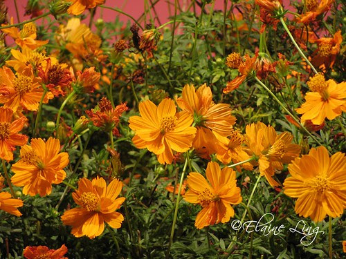 Orange Joy