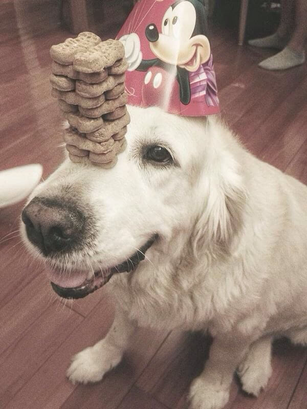 These 31 Happy Birthday Dog Images Are So Cute I'm Wagging ...