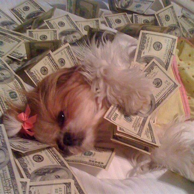 cachorros-ricos-18