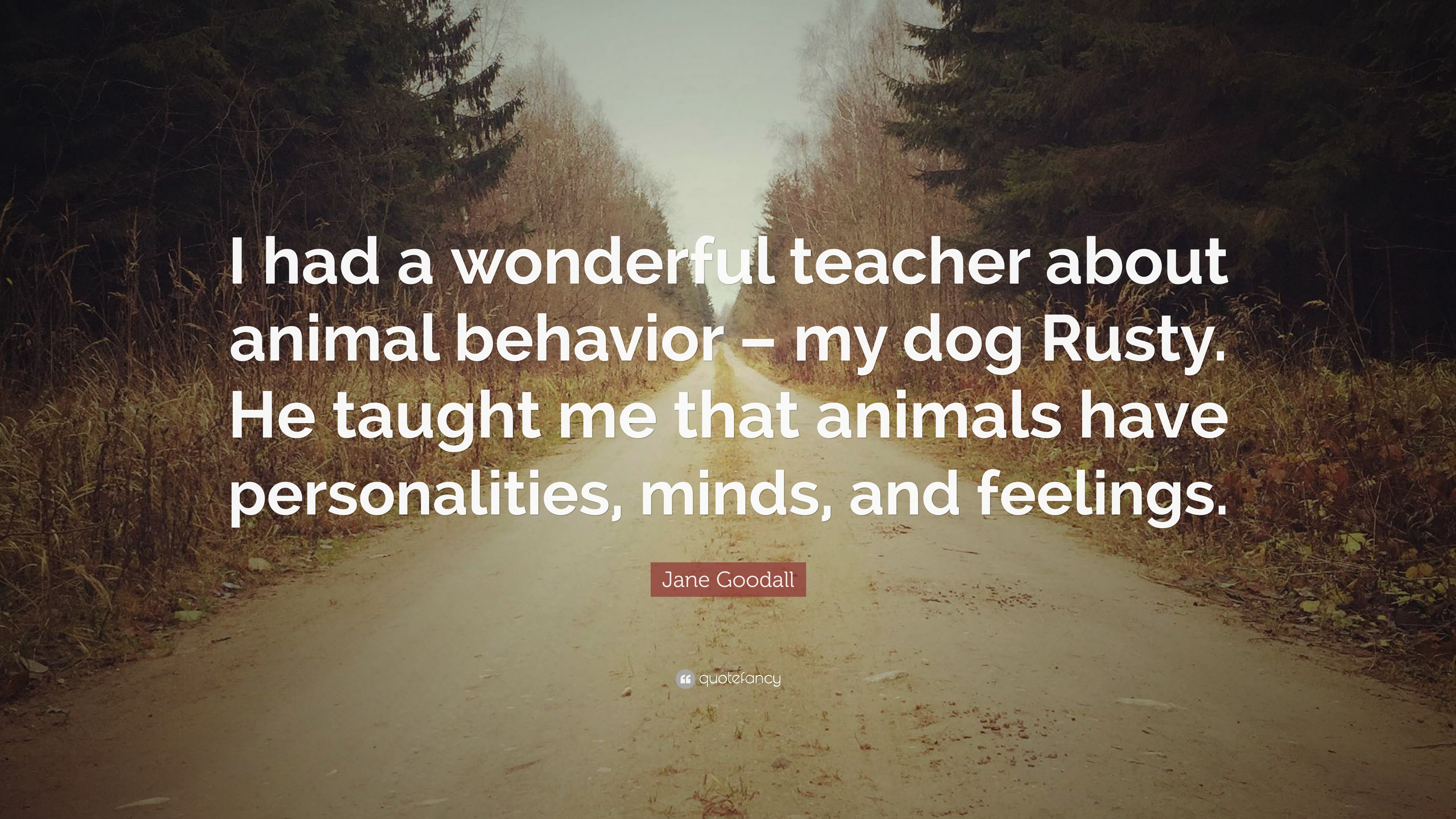 I Had A Wonderful Teacher About Animal Behavior Jane Goodall