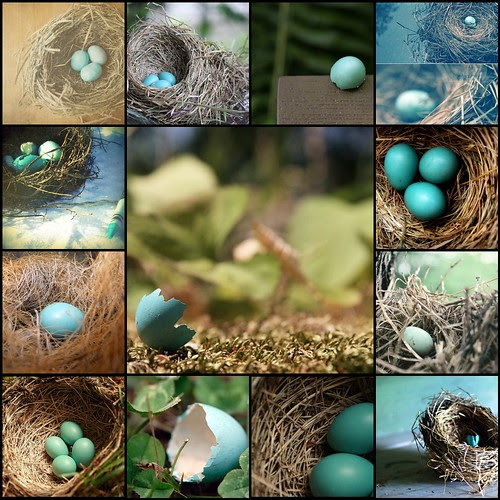 [Things I ♥ Thursday]  Blue robin eggs