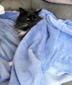 warm-robed