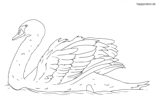 35 malvorlage vogel einfach  besten bilder von ausmalbilder