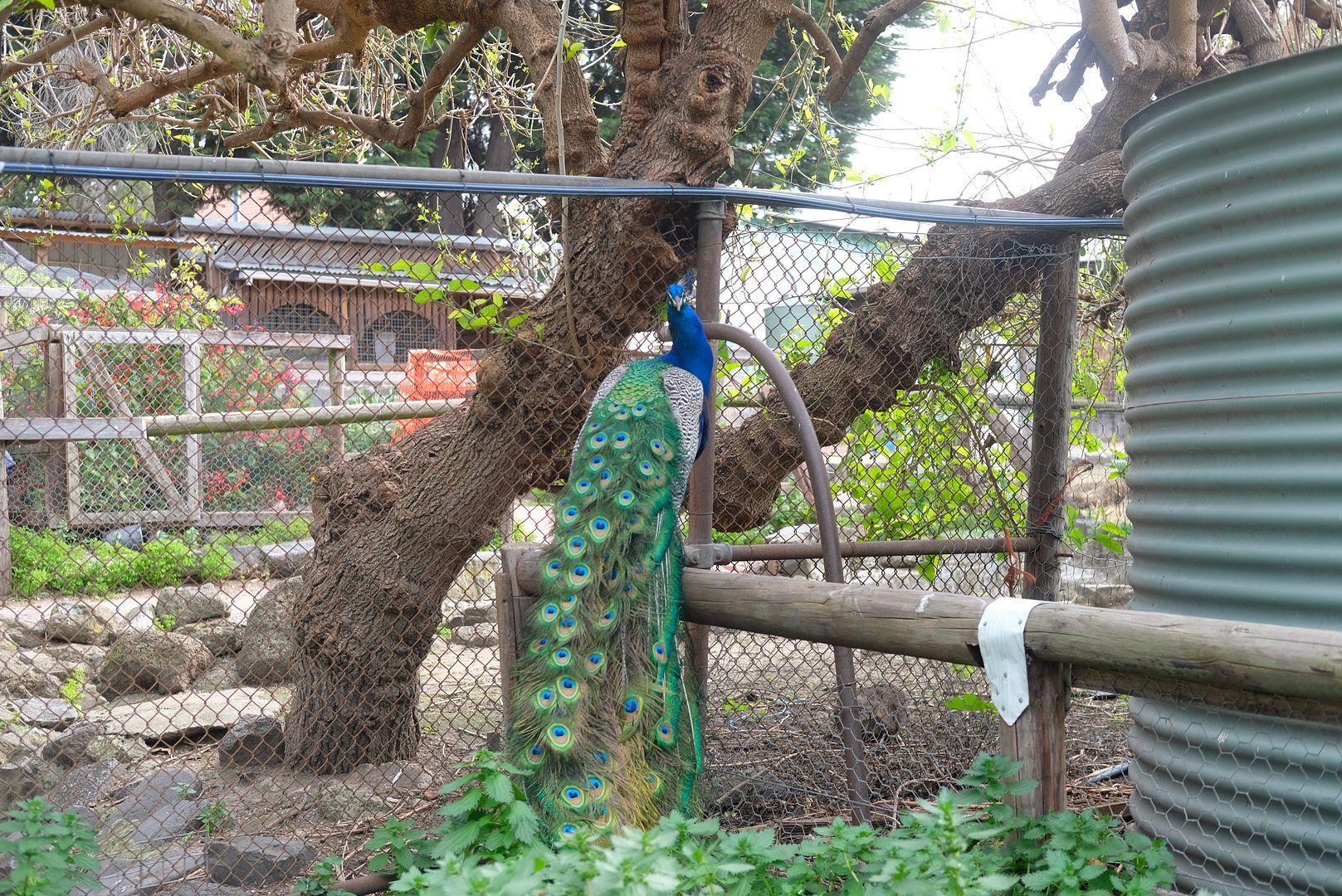 photo Collingwood Childrens Farm 2.jpg