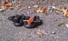 Snake in the parking lot