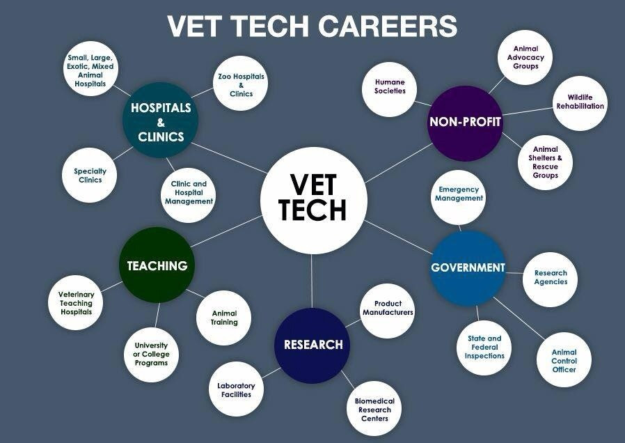 rcaanimals: So many things a vet tech can do!